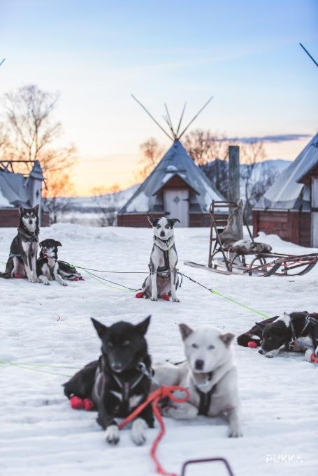 DogSledding_Max-Lander_PukkaTravels-Watermark-8